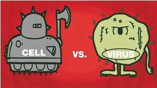 Tế bào diệt virus như thế nào?