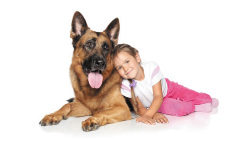 Chú chó nhỏ cứu sống 1 cô bé - Small dog helps a girl