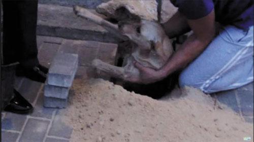 Chú chó được cứu từ dưới lòng đất - Dog saved from underground
