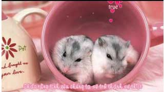 Mouse love rice