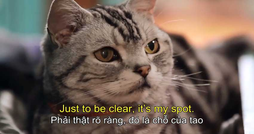 Mèo con yêu quý